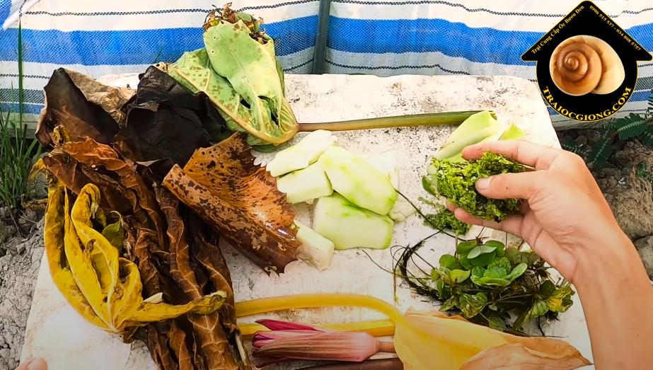 Thức ăn cho ốc bươu đen